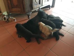Cuccioli4